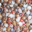 Royalty-Free Stock Photo: Seashells
