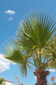 Palm — Zdjęcie stockowe