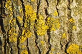 Moss on a tree — Stockfoto
