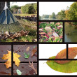Autumn collage — Stock Photo #2266376