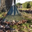 Autumn leaves and rake — Stockfoto
