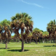 Palm trees in a florida park 2 — Stock Photo