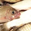 Stock Photo: Fish in kitchen sink close up