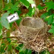Stock Photo: Bird nest - real estate 4