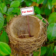Stock Photo: Bird nest - real estate 6