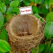 Bird nest - real estate 6 — Stock Photo