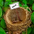 Stock Photo: Bird nest - real estate 2