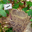 Bird nest - real estate — Stock Photo