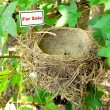 Bird nest - real estate 8 — Stock Photo