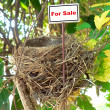 Bird nest - real estate 7 — Stock Photo