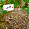 Bird nest - real estate 3 — Stock Photo