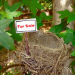 Bird nest - real estate 5 — Stock Photo