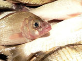 Fish in kitchen sink close up — Stock Photo