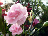 Flower bouquet 7 — Stock Photo