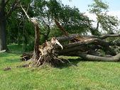 Dommages d'orage - arbre vers le bas 4 — Photo