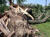 Storm damage - tree down 2 — Stock Photo