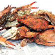 Crab - cooked blue crabs - Stock Photo