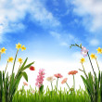 Spring garden scenery — Stock Photo