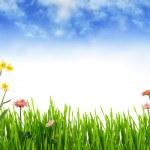 Spring garden — Stock Photo #2238568