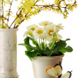 spring arrangement — Stock Photo