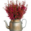 Decorative heather — Stock Photo