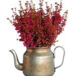 Decorative heather — Stock Photo #2239942