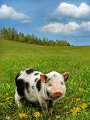 Cute piglet on grass — Stock Photo