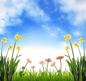 Spring garden scenery — Stock Photo