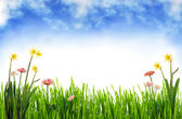 Bahar bahçe — Stok fotoğraf