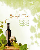 Wine and grapevine design — Stock Photo