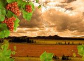 Виноград, виноградная лоза и закат — Стоковое фото
