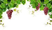 Grapevine border with pink grapes — Stock Photo