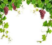 Grapevine hranice s růžové hrozny — Stock fotografie