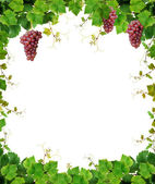 Grapevine frame with pink grapes — Stock Photo