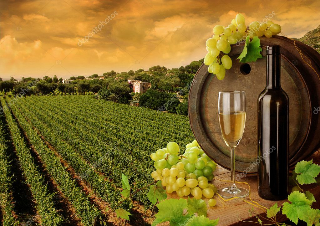 Wine barrel, bottle and glass with fresh grapes, on background of sunset vineyard  Foto de Stock   #2284112