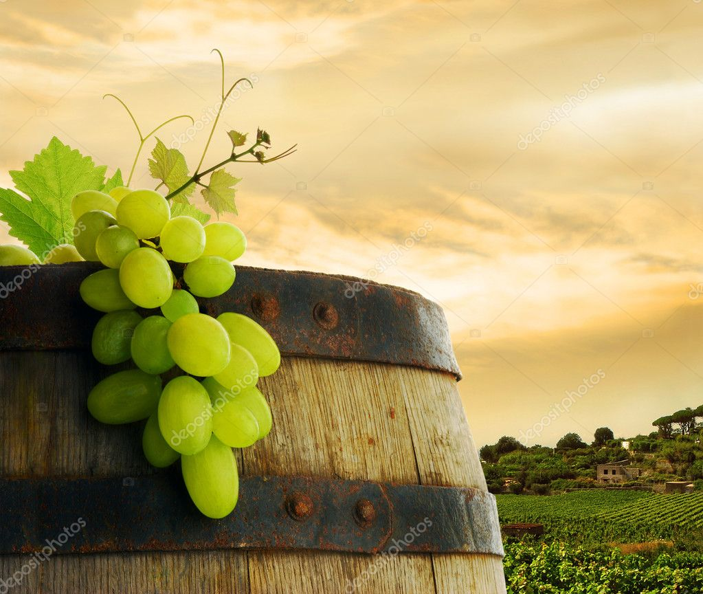 Wine barrel with fresh grape, on background of sunset vineyard  Foto de Stock   #2285452