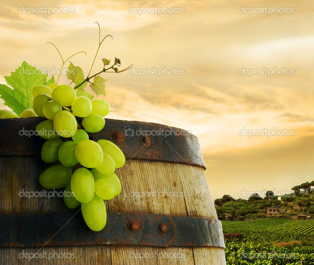 Wine barrel with fresh grape, on background of sunset vineyard — Photo #2285452