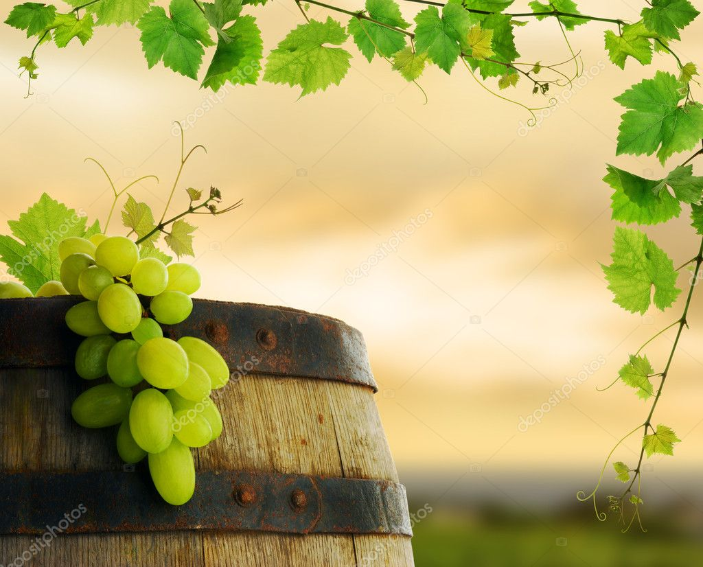 Wine barrel with fresh grape and grapevine framing, on background of sunset vineyard — Stock Photo #2285485