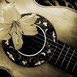 Vintage guitar with lily - Stock Photo