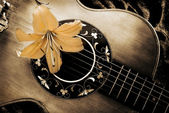 Vintage guitar and lily — Stock Photo