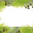 Fern and ivy grungy frame — Stock Photo