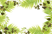 Fern and ivy frame — Stock Photo
