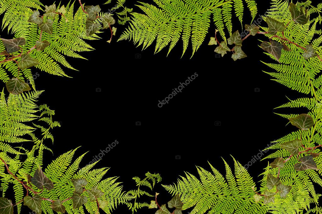 Natural border of fern and ivy plants on black background. — Stock Photo #2351694