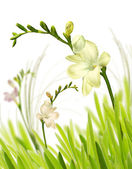 Spring flowers in grass — Stock Photo