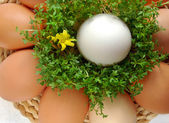 Eggs with cress — Stock Photo
