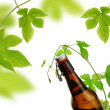 Beer and fresh green hops — Stock Photo