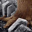 Old jewish cemetery — Stock Photo #2461921