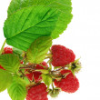 Raspberries with leaves — Stock Photo #2522940