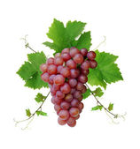 Decorative fresh pink grape — Stock Photo