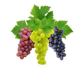 Three fresh decorative grapes — Stock Photo